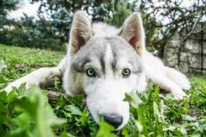 Does an Adult Need an Attorney for a Dog Bite Injury Claim?