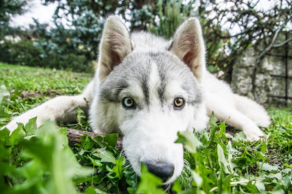 Utah Dog Bites and Premises Liability